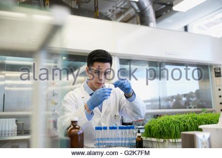 Scientist conducting scientific experiment in GMO laboratory - Stock Photo