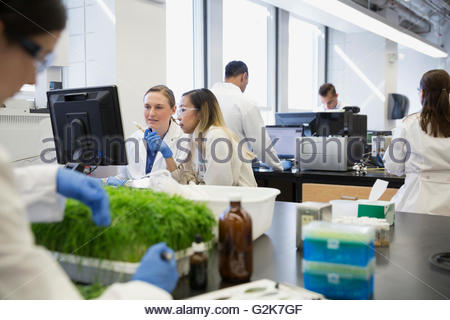 Scientists working at computer in GMO laboratory - Stock Photo