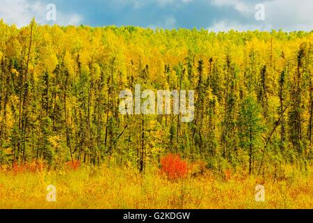 Boreal forest in autumn Meadow Lake Saskatchewan Canada - Stock Photo