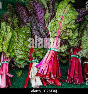 Colorful Swiss Chard at the Farmers Market - Stock Photo