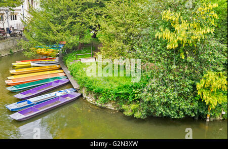 MULTI COLOURED PUNTS AND LABERNUM TREE IN FLOWER ON THE RIVER CHERWELL AT MAGDALEN BRIDGE OXFORD CITY - Stock Photo