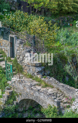 viticultural terraces above Riomaggiore near La Spezia, Liguria, Italy - Stock Photo