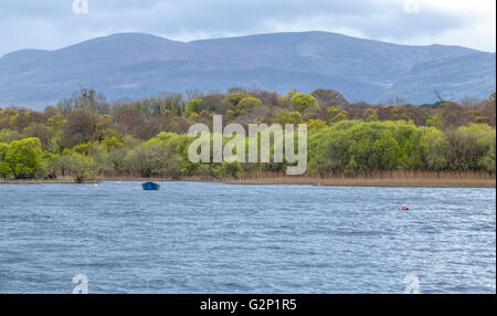 Blue boat on Lough Leane in Killarney National Park near the town of Killarney, with oak and yew woodlands and mountain - Stock Photo
