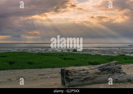 A large piece of driftwood washed up on a foreshore - Stock Photo