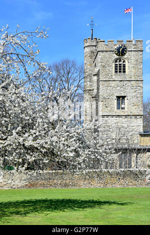 Spring blossom & St Margaret's Church tower The Abbey Church within grounds of Barking Abbey in London Borough of - Stock Photo