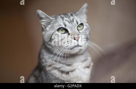 a domestic pet cat - Stock Photo