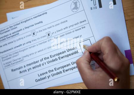 Flintshire, North Wales, UK. 2nd June 2016. European Referendum – European Referendum postal ballet papers begin - Stock Photo