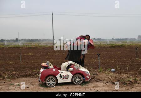 (160602) -- YINCHUAN, June 2, 2016 (Xinhua) -- Luo Yan, a farm worker from southwest China's Guizhou Province, carries - Stock Photo