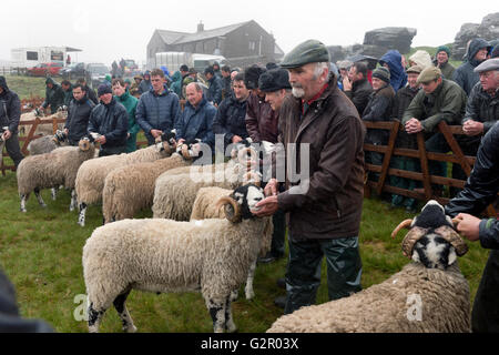 Competitors in The 63rd Tan Hill Open Swaledale Sheep Show 2016, near Richmond, North Yorkshire, UK - Stock Photo