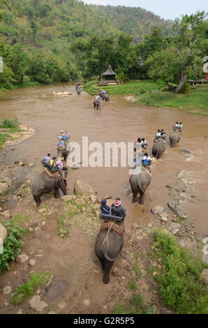 Elephant riding near the river in Chiang Mai, Thailand. - Stock Photo