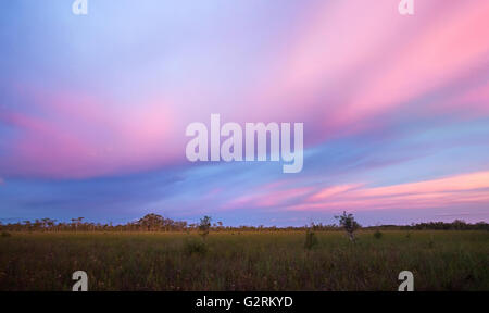 Stunning tropical sunset over sawgrass prairie and cypress dome in Florida Everglades - Stock Photo