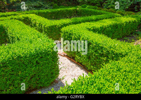 well manicured privet hedge in geometric pattern - Stock Photo