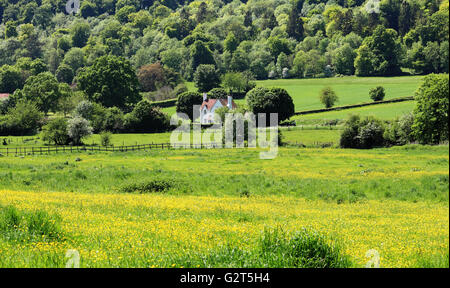 An English Rural Landscape in the Chiltern Hills with field full of buttercups - Stock Photo