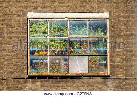 Exterior view of window with plants growing indoors, Maastricht, Limburg, Netherlands - Stock Photo
