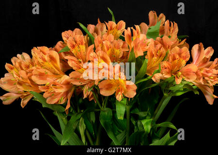 Bunch of beautiful alstroemeria flowers - Stock Photo