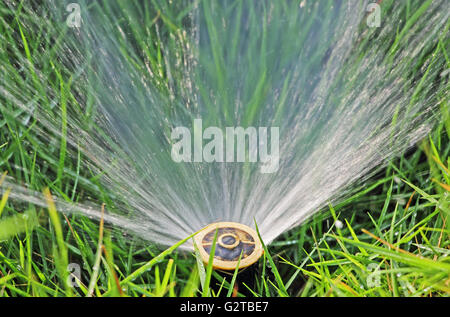 Closeup of small working water sprinkler embedded in grass lawn - Stock Photo