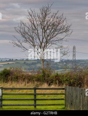 Tree in rural Northern Ireland farmland. - Stock Photo