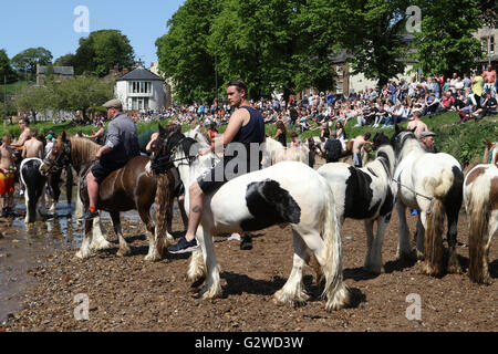Appleby-in-Westmorland, Cumbria, England - June 03, 2016: Horses being washed in the river Eden prior to trading - Stock Photo