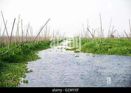 Floating garden, Inle Lake, Shan State, Myanmar - Stock Photo