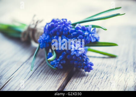 Bouquet of Muscari armeniacum (Blue Grape Hyacinth) on the rustic wooden background. Shallow depth of field. Toned - Stock Photo