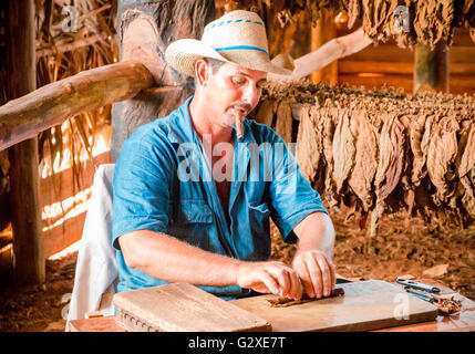 [Editorial Use Only] VIÑALES VALLEY, CUBA - Tobacco farmer smoking a cigar while he rolls one of tobacco leaves.