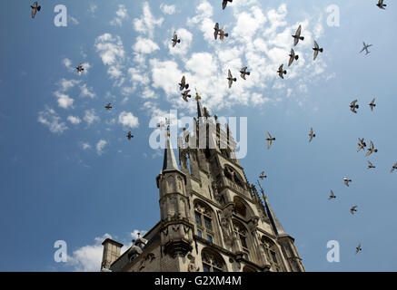 Birds and an airplane fly over the Gothic Stadhuis (city hall) in Gouda, the Netherlands - Stock Photo