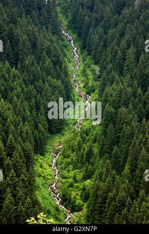 Stream in Altindere National park, close to  Panagia Sumela monastery. Trabzon province, Black Sea region, Turkey - Stock Photo
