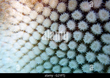 4 June 2016 - Great Barrier Reef, Australia - In the aftermath of this year's worst-ever coral bleaching event for - Stock Photo