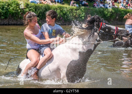Appleby-in-Westmorland, Cumbria, UK. 5th June 2016. Travellers ride their horses in the river Eden prior to selling - Stock Photo