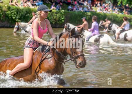 Appleby-in-Westmorland, Cumbria, UK. 5th June 2016. A young traveller girl washes her horse in the river Eden prior - Stock Photo