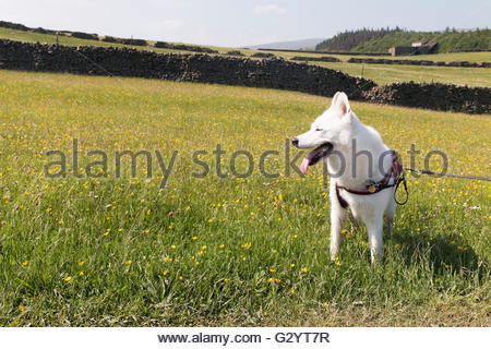 Holwick, Middleton-in-Teesdale, Co Durham, UK. 5th June 2016 A bright sunny Sunday afternoon in Upper Teesdale, - Stock Photo
