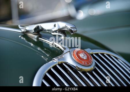 Jaguar XK 150 hood ornament. The Hardy Country Classic Car Tour - Stock Photo