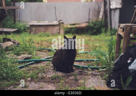 Stray black cat on a background of rural life. - Stock Photo