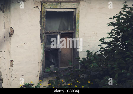 Garden herbs on the background of an old abandoned house with an old window. - Stock Photo