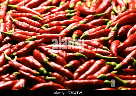 Red chilli peppers. - Stock Photo