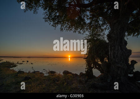 Tree on bank framing sunset over river - Stock Photo