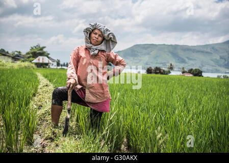Female farmer working in a rice paddy field at Lake Toba (Danau Toba), North Sumatra, Indonesia, Southeast Asia, - Stock Photo