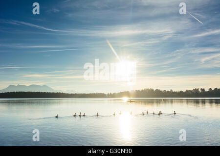 Chiemsee with ducks , canoeists and Alps in the background, Germany, Bayern, Bavaria, Oberbayern, Chiemsee, Upper - Stock Photo