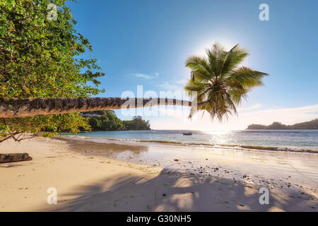 Sunset at the beach on Mahe island, Seychelles, Indian Ocean, Africa - Stock Photo