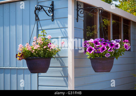 Graden sheds in summer weather, flowers, hanging baskets and powder blue painted wooden shed, at Southport Garden - Stock Photo