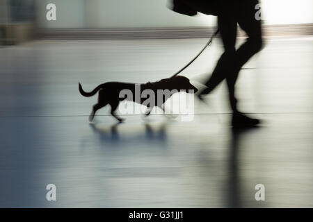 Berlin, Germany, dachshund on a leash - Stock Photo