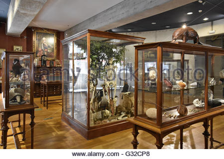 Glass display vitrines Museum of Natural Science in Madrid Spain Europe - Stock Photo