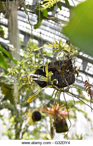 Plants in hanging pots, Royal Botanical Garden Madrid Spain Europe. - Stock Photo