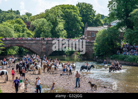 Appleby-in-Westmorland, Cumbria, UK. Crowds gather to watch the traditional washing of horses in the river Eden - Stock Photo
