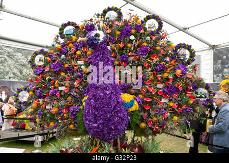 RHS Chelsea Flower Show 2016 Great Pavilion Flower Peacock - Stock Photo