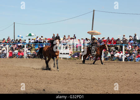Cowboy and horse in a rodeo in Alberta, Canada - Stock Photo