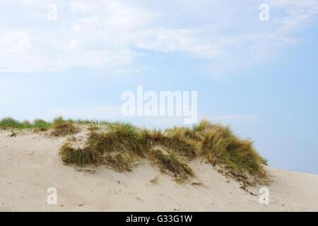 marram grass on sand dune - Stock Photo