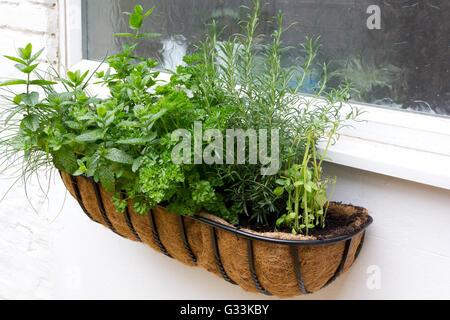 Window herb box - Stock Photo