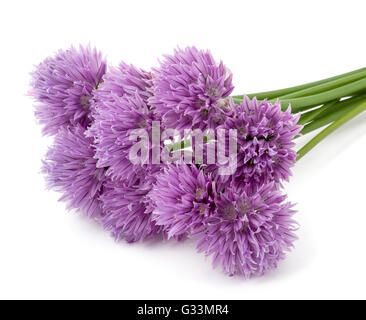 Chives  Flowers isolated on white background - Stock Photo