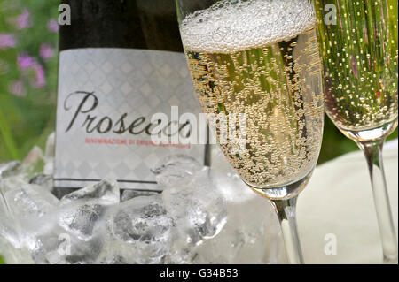 PROSECCO ALFRESCO Close-up on freshly poured glasses of Prosecco with bottle in iced wine cooler  behind on alfresco - Stock Photo
